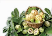 Where Can You Buy Garcinia Cambogia? | GNC Garcinia Cambogia Review