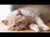 Diary of a Sad Cat Viral Video, Funny Cat Thoughts We Knew All Along