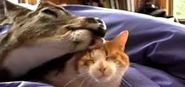 Sweet Love Affair Between Deer and Cat | Unlikely Animal Friendships