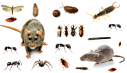 The ultimate answer to pest infestation is Pest Control Gurgaon – Pest Control 24X7