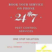 See Effective Result with Pest Control Service Gurgaon