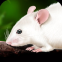 Rat Dissection for iPad on the iTunes App Store