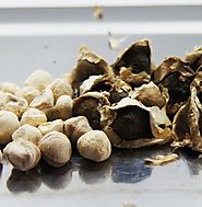 Buy Moringa Seeds Online - 100% Natural Moringa Seeds at Super Natural Botanicals