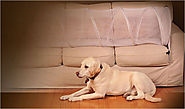 How to Keep Dog Off Couch? 7 Easy Ways that Actually Work