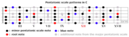 Solo Guitar - The Blues Scales