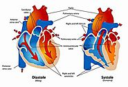 Stem Cell Therapy Lending Its Hand To Cure Heart Impairment