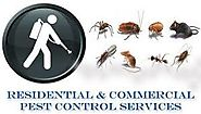 Hire The Cheap Pest Control Services in east delhi