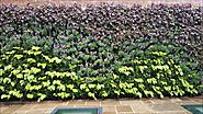 Green Living Walls Roofing Green Infrastructure Scotscape Landscaping and Vertical Planting Systems