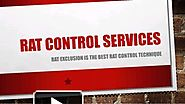 Rat Control Services At Very Affordable Cost