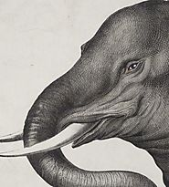Best Antique Animal Prints for Sale