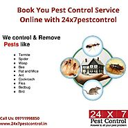 Professional Pest Control Expert in Delhi