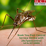See Effective Result with Pest Control Service Delhi