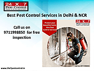 Pest Control Delhi-Most Effective & Odorless Services | edocr