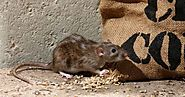Rat Exclusion Service In Georgia