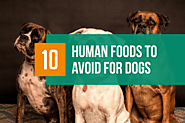 10 Human Foods to Avoid for Pets - BarkForce