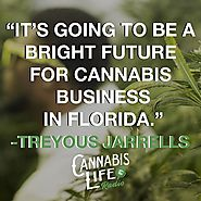 Cannabis – Bright Future In The Business Industry