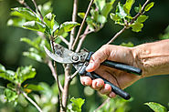 Tools of the Trade: DIY Tree Pruning