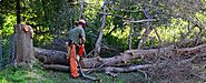 Tree Removal and Landscaping in Broken Arrow, OK | AJ Tree Service