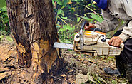 Tree Removal and Landscaping in Oklahoma | Oklahoma | AJ Tree Service