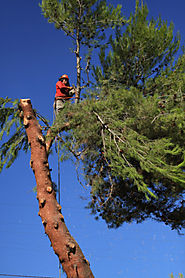Tree Removal and Landscaping | Oklahoma | AJ Tree Service