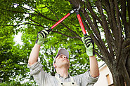 5 Reasons Why You Should Prune Your Trees