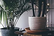 Health Benefits of Indoor Plants - 7 Benefits You Probably Weren't Aware Of -