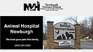 Affordable Animal Hospital in Newburgh