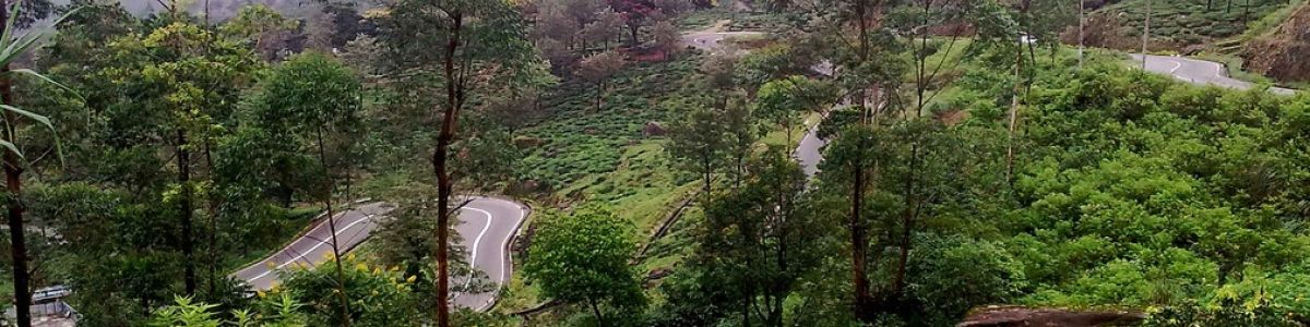 Headline for Top Things to do in Nuwara Eliya - Delightful Indulgences in a Misty City of Glory