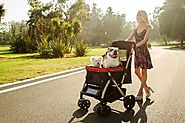 Buy A Dog Stroller For Playing And Pampering Your Little Pet! – Pet Rover