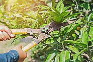Tree pruning Melbourne would take good care of those problems outdoors