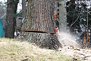 Maintain the Landscape by Hiring Tree Removal Services Melbourne
