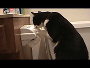 Boots vs Toilet Paper (Funny Cat)