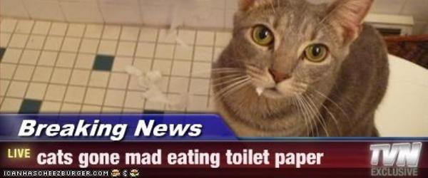 Headline for cat toilet paper guard