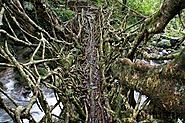 Ummonoi Root Bridge