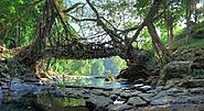 Umkar Root Bridge