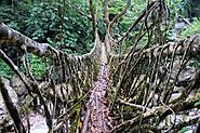 Ritymmen Root Bridge