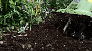 How to Improve Garden Soil