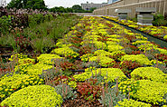 11 Stunning Green Roofs So Cool They May Turn Rush Limbaugh Into a Tree Hugger | Hometown Roofing Contractors