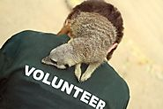 Volunteer at an Animal Charity