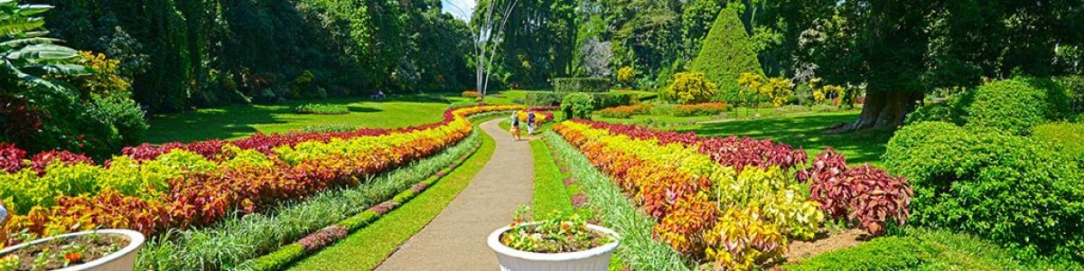 Headline for Why Visit a Botanical Garden – Be Soothed and Serenaded by Greenery