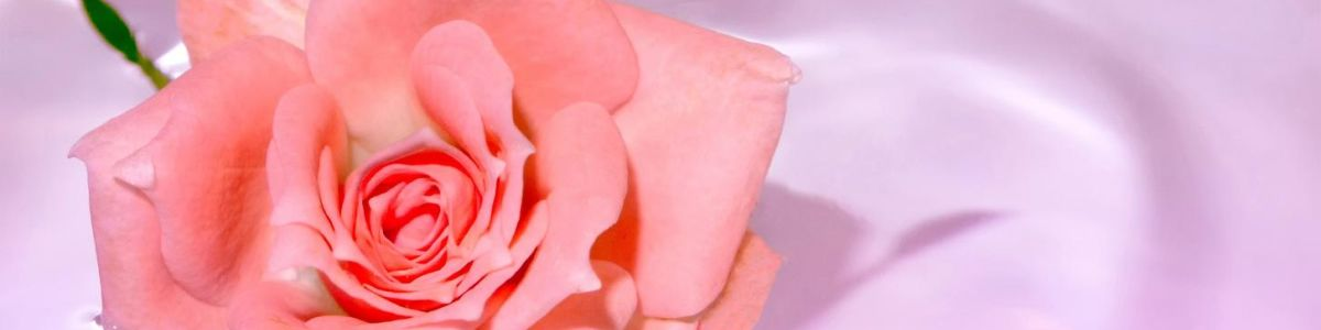 Headline for Rose Water Benefits – Nature's Invaluable Gift