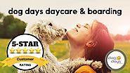 St Paul Dog Daycare & Boarding Terrific 5 Star Review