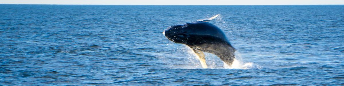 Headline for Types of Whales in Sri Lanka – Favoured Playground for a 'Whale of a Time'