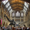 Families and Dinosaurs - Visiting the London Museum of Natural History | Family Vacation Plans