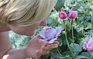 Sense of Smell - Makes vast Conversion for your Business
