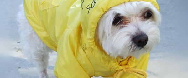 Headline for Best Raincoats For Dogs, Large and Small, Colors & Patterns in 2014