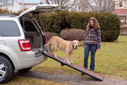 Best Rated Dog Stairs Reviews 2014