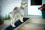 Best dog ramps reviews 2014