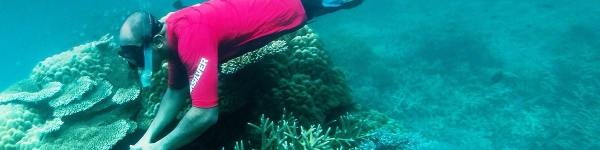 Headline for Reasons Why Tioman is Great Dive Destination – Great reasons to visit the island