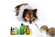 Study: Essential Oils and Coconut Oil Effective For Skin Disorders on Dogs